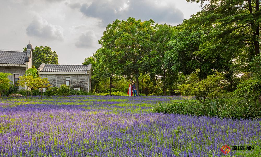 在威尼斯人棋牌游戏平台绿岛湖,这里隐藏着一片紫蓝色的花海,浪漫唯美宛如童话世界。