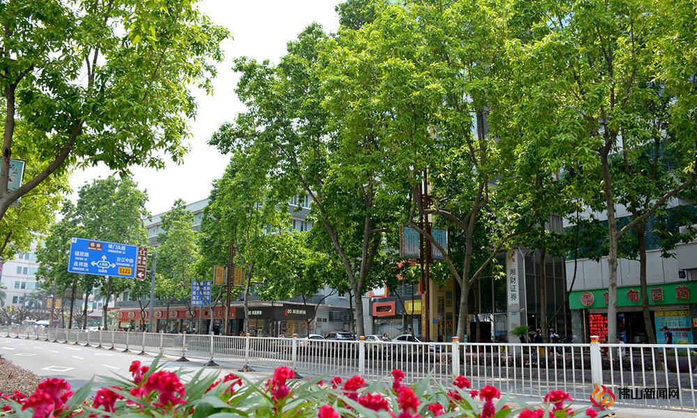 夏日,威尼斯人棋牌游戏平台街头白兰花香一路弥漫,纯洁美丽的白兰花,有的已经肆意绽放如手掌,有的娇羞含苞装饰浓密绿叶。