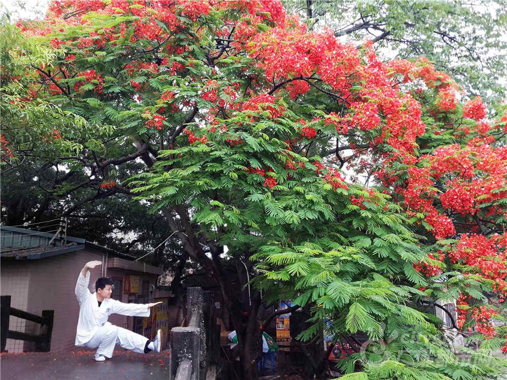 凤凰花开的季节