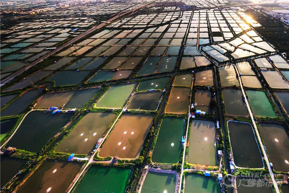 桑基鱼塘是我国珠三角地区,为充分利用土地而创造的一种挖深鱼塘,垫高基田,塘基植桑,塘内养鱼的高效人工生态系统。作者:何迎僖