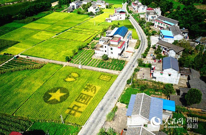 鸟瞰稻田里的中国梦