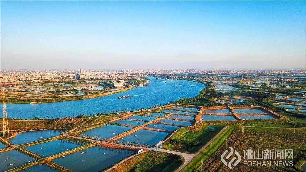 红遍全国!佛山滨江渔村,一条鱼撬动29亿产业 | 相约百里芳华